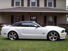 NEW MUSTANG PIC 10