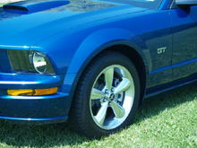 Mustang at Coloniel Park