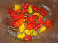 Beautiful HOT peppers