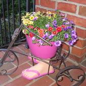 Calibrachoa on the front porch.