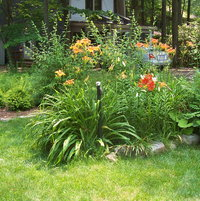 Assorted lilies including common orange daylily and Asiatic