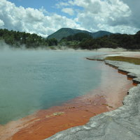 The bush in the background does not suffer from the constant sulphur smell at Wai-O-Tapu thermal springs, New Zeland.