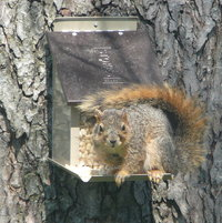 Mr. Squirrel looks like he's about to attack!!