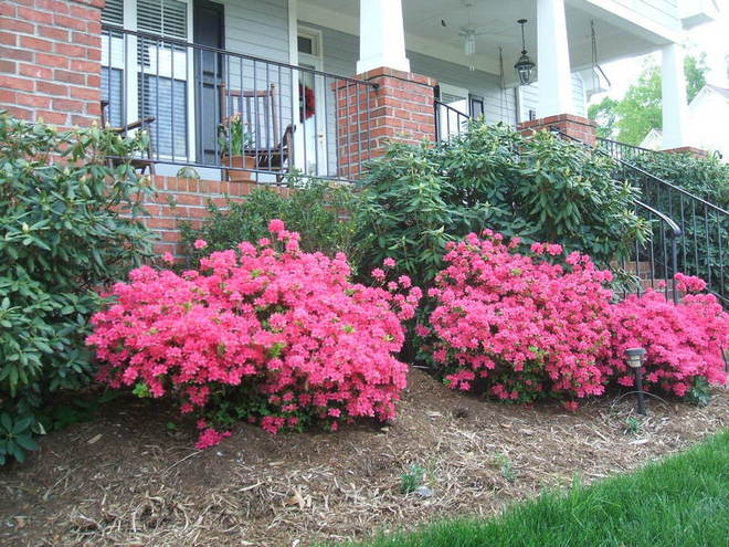 Azaleas, rhododendrens, and gardenias function as foundation plants around the front porch