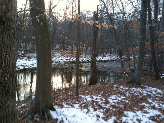Surrounded by hardwoods and a creek….but….