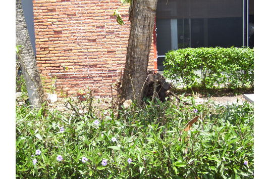 Lindru Gardens Apartments Reviews