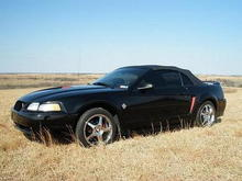 The Stang shortly after I purchased it.