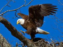 Shiloh Eagles