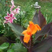 Canna lilies and lilies