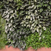 A wall of foliage.