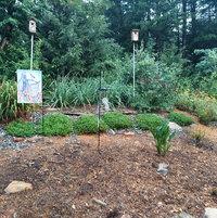 Slope garden July 2021