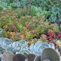 In my mind, I liked the idea of putting these succulent plants together. I'm really pleased with the actual results.