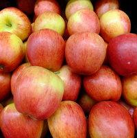Apple 'Genesis'