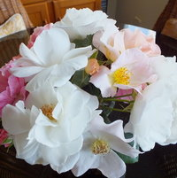 Vased Roses...