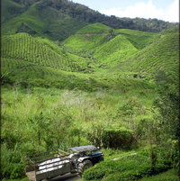 Tractor collecting Tea Leaves at Cameron highlands Plantation