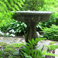 birdbath among the ferns (back garden)