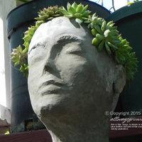 My most-recently made statue planter sports a head of clumping Echeveria parva & Echeveria 'Ramillette'