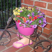 Calibrachoa on the front porch.