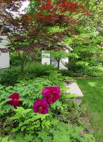 Side garden, tree peony, Japan... photo by bottlegreen on Garden ...