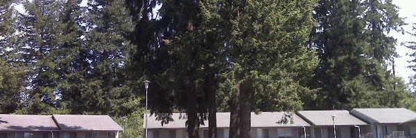 Timberknoll