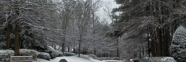 Calibre Woods